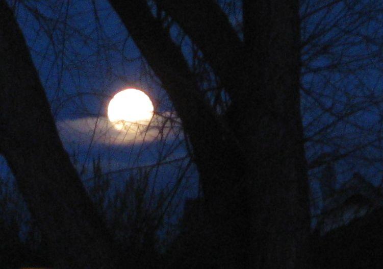 Vollmond, vor dem einige Schleierwolken liegen, fotografiert durch die kahlen Äste eines Baumes.