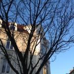 Das Foto zeigt ein Kölner Bürgerhaus, dessen Giebel in Sonne getaucht ist, fotografiert durch die noch nackten Zweige eines Kirschbaums.