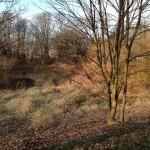 Das Bild zeigt das Ufer der Leine mit einer noch völlig braun-grauen Uferbepflanzung.