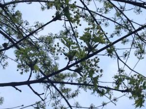 Die grünen Zweige des Baums nebenan, ebenfalls gegen den blaun Himmel fotografiert.