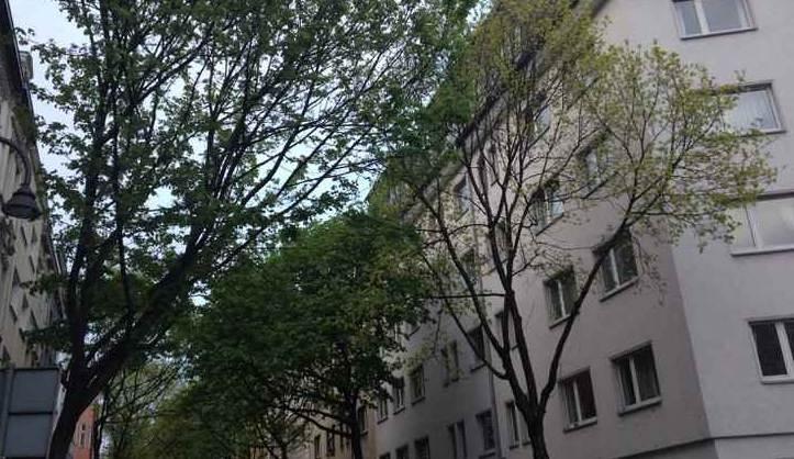 Blick in die baumbestandene Straße und das junge, hellgrüne Blätterdach.