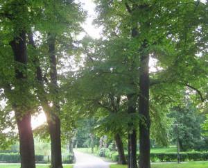 Sonnenstrahlen blinken durhc die Bäume
