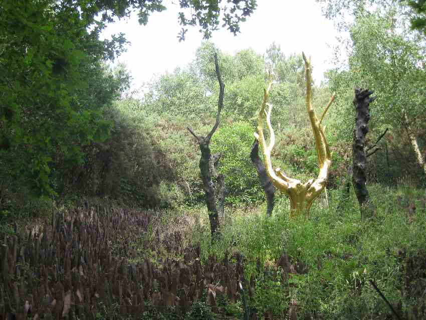 Goldgefärbte Baumstämme in der bretonischen Brocéliande