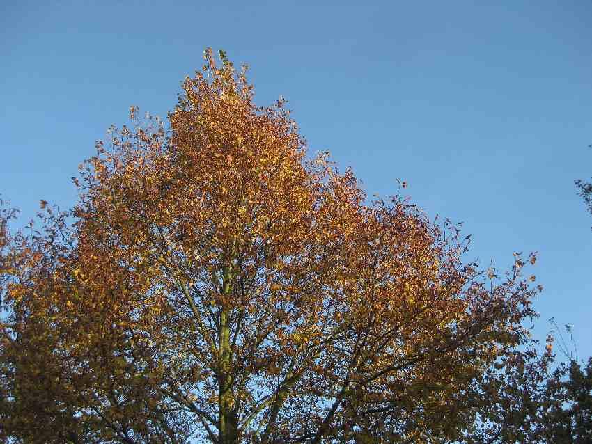 Baum mit bunten Blättern vor blauem Himmel