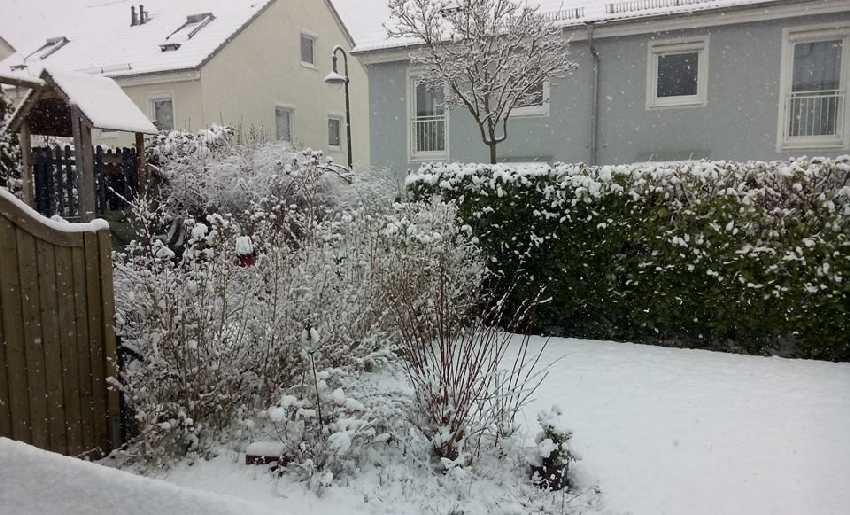 Blick in unseren verschneiten Garten