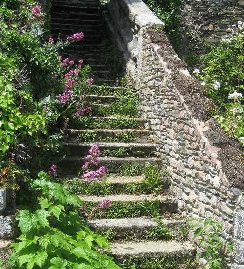 Alte Treppe, auf der lila blühende Lupinen wachsen