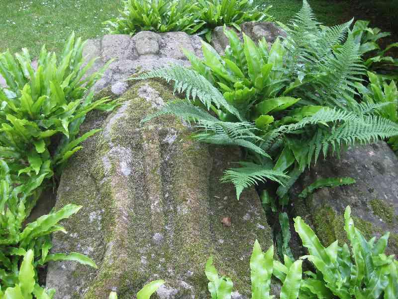 Von Warn überwucherter Grabstein in der Abtei von Beauport