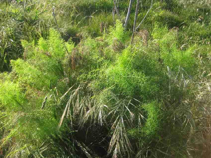 bretonische-flora-gruenzeug