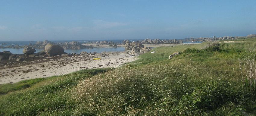 Strandhafer mit Strand und Meer im Hintergrund