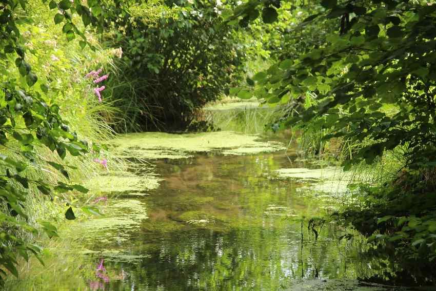 Von Grünpflanzen und Blumen überwachsener Kanal im Parc Saint-Pierre in Amiens