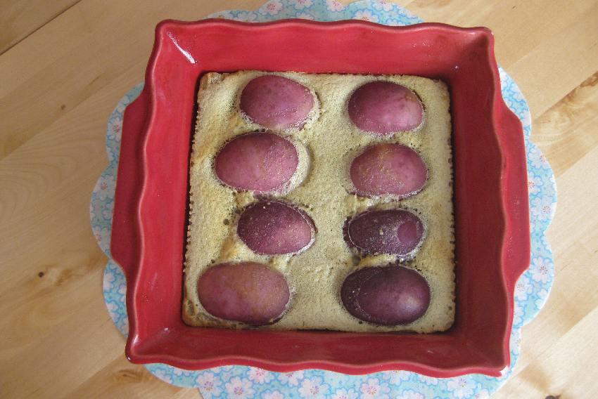 Clafoutis mit Weinbergpfirichen noch ohne Puderzuckerdeko