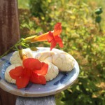 Zitronenkekse mit roten Trompetenblüten auf unserer Gartenbank