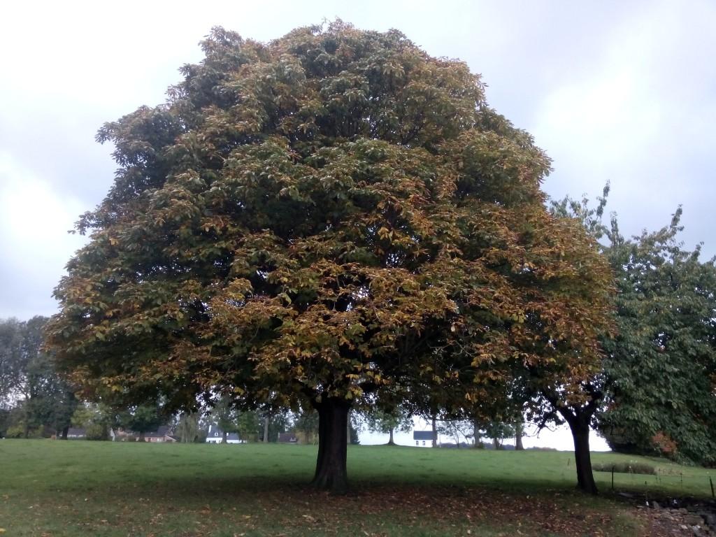Großer Baum mit herbstbunten Blättern