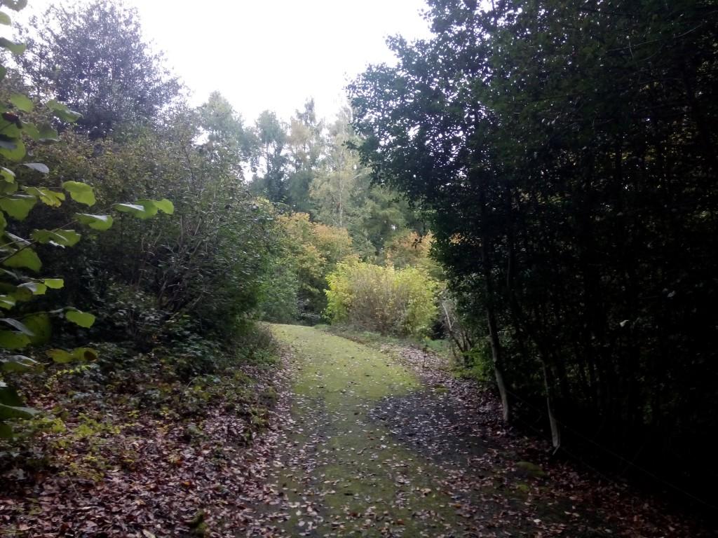 Weg durch den Park mit vielen bunten Blättern auf dem Boden
