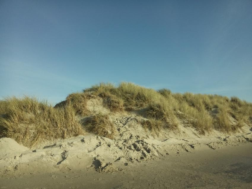 Düne am Norderneyer Weststrand