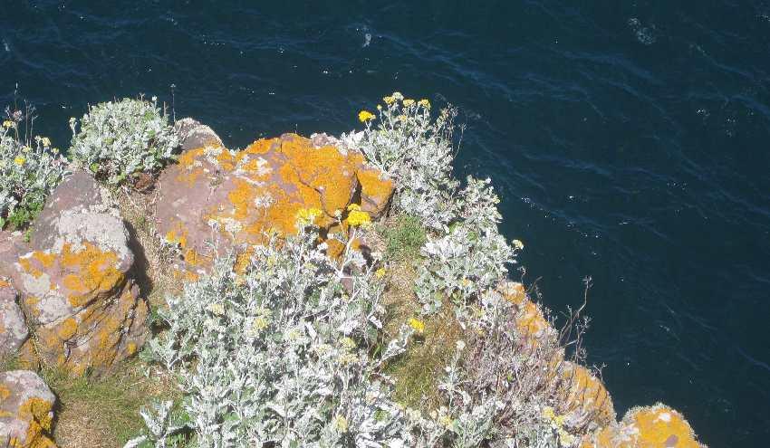 Felsen mit gelb-orangenen Flechten am Cap Fréhel