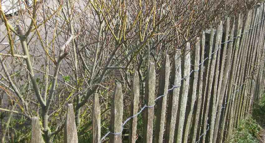 Malerischer Holzzaun als Fußwegbegrenzung am Cap Gris-Nez