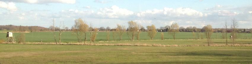 Feld mit frühlingsgrünen Bäumen in Vorpommern