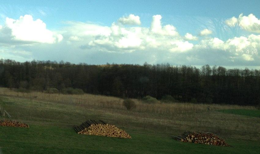 Brennholzstapel auf einer frühlingsgrünen Wiese in Mecklenburg-Vorpommern