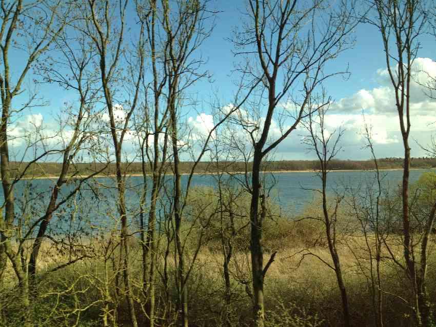 Malerischer See hinter Baumstämmen