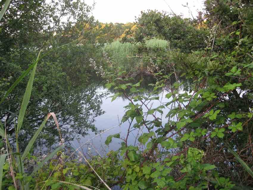 Teich mit büschen und Sträuchern umwachsen in Saint-Philibert