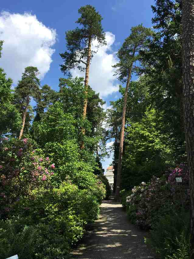 Palmen im Botanischen Garten in München-Nymphenburg