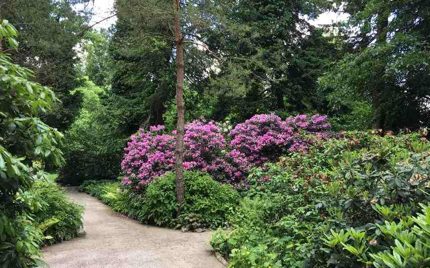 Allee mit Rhododendron im Botanischen Garten in München-Nymphenburg