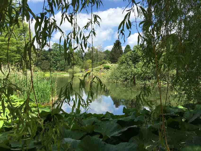 Teich unf Farne im Botansichen Garten München-Nymphenburg