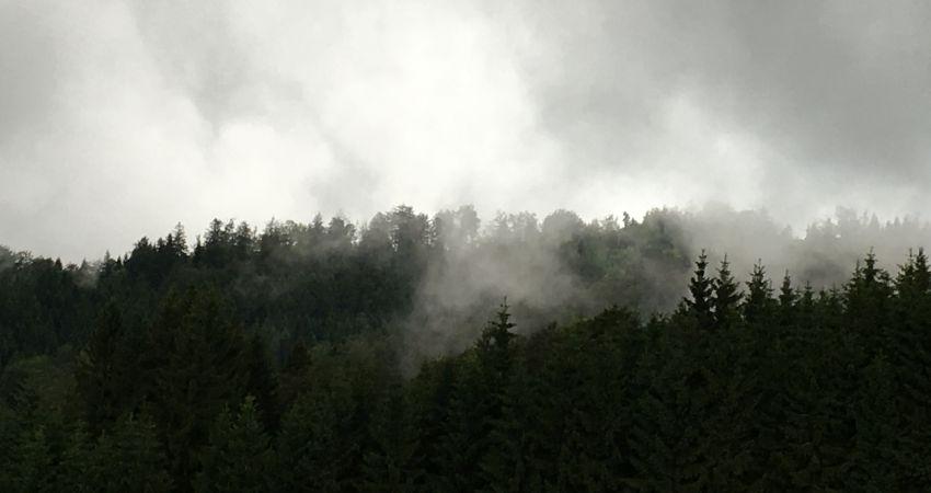Nebel zeht zwischen Tannen auf