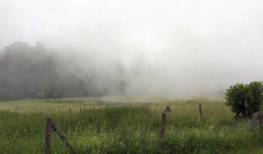 Nebel am Kniebis
