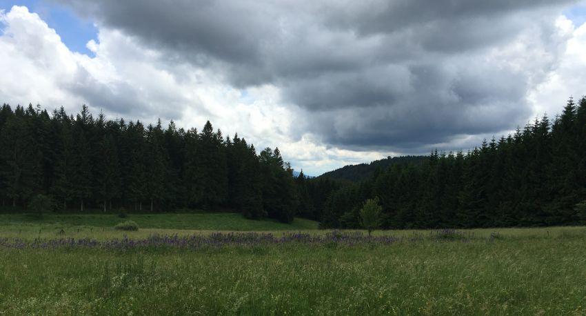 dunkle Regenwolken bei der Kräuterwanderung unterhalb der Hornisgrinde