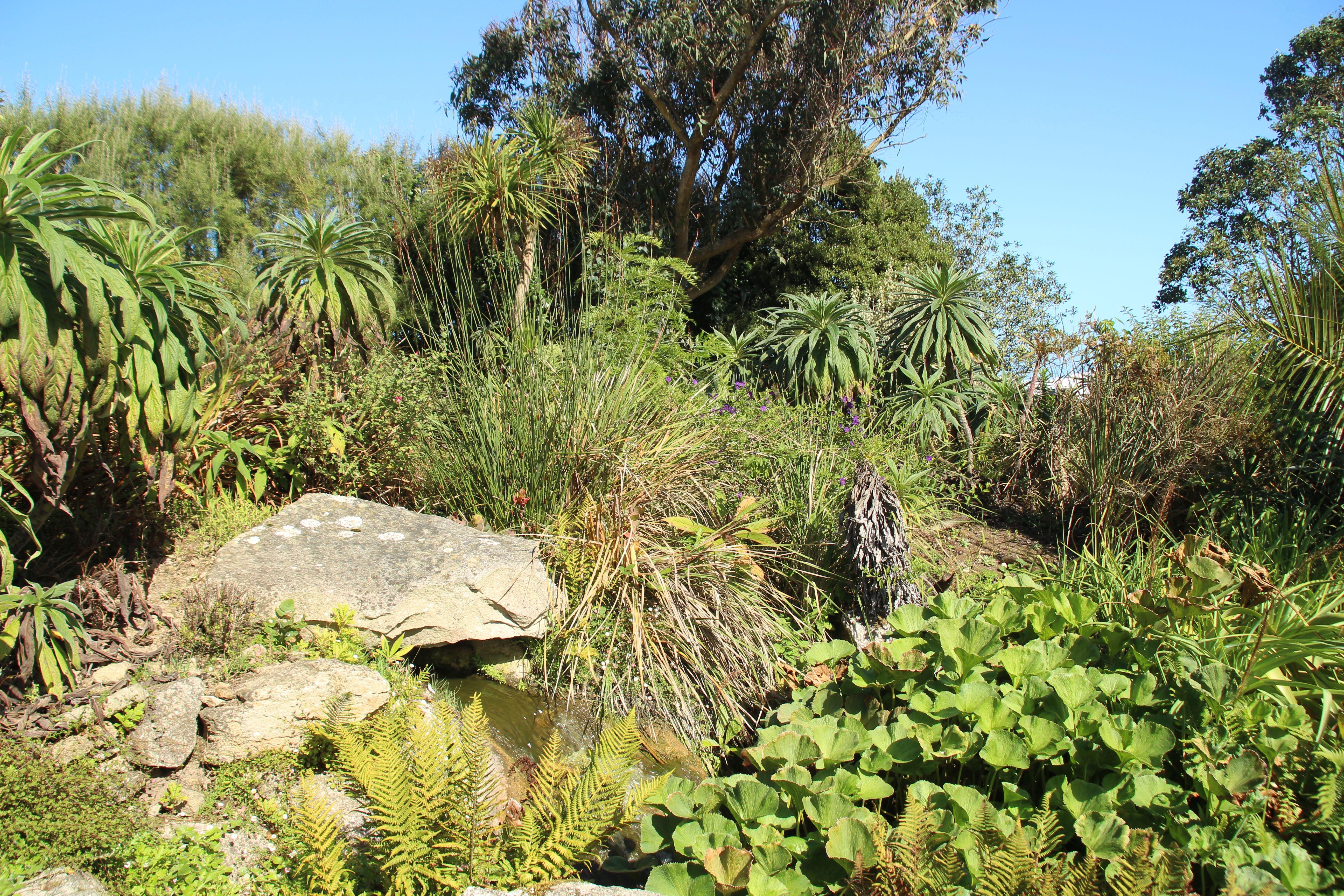 roscoff-jardin-exotique