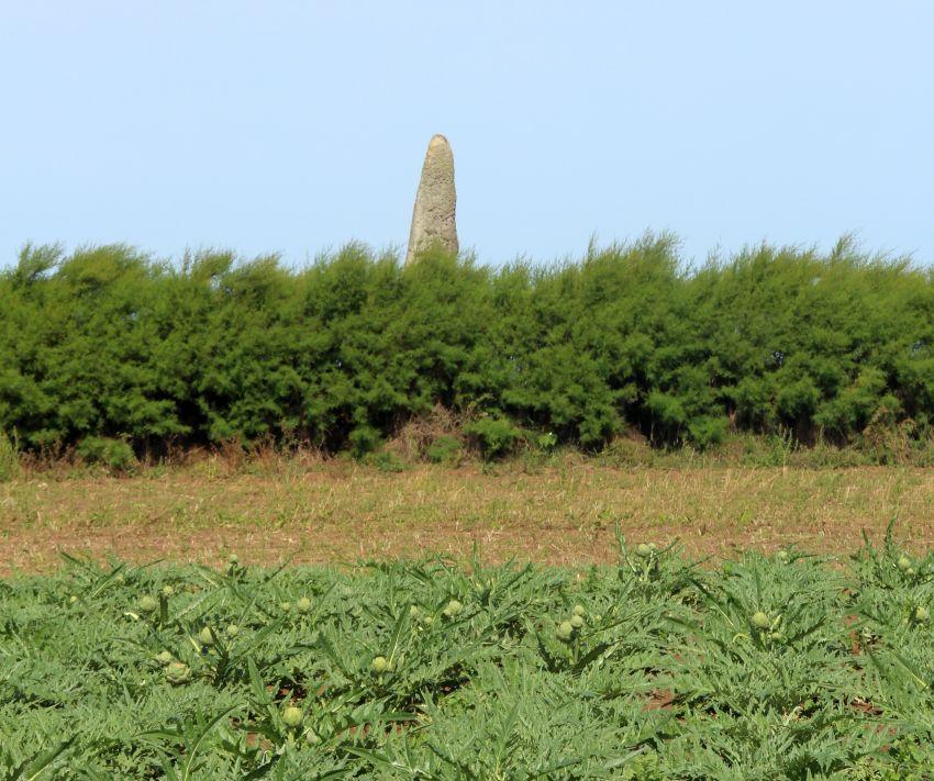 Menhir von Cam Louis in Plouescat mit Artischockenfeld