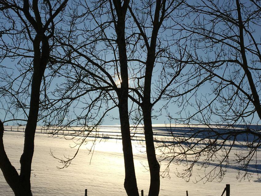 Schnee, Sonne, entlaubte Bäume in der Eifel